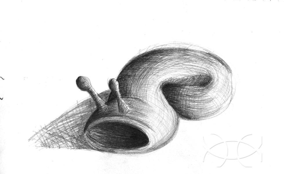 """slug"" ""sketch"" ""drawing"" ""imushroomu"" ""pencil"""