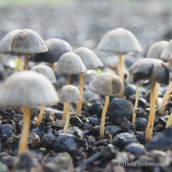 My Morning Mushroom