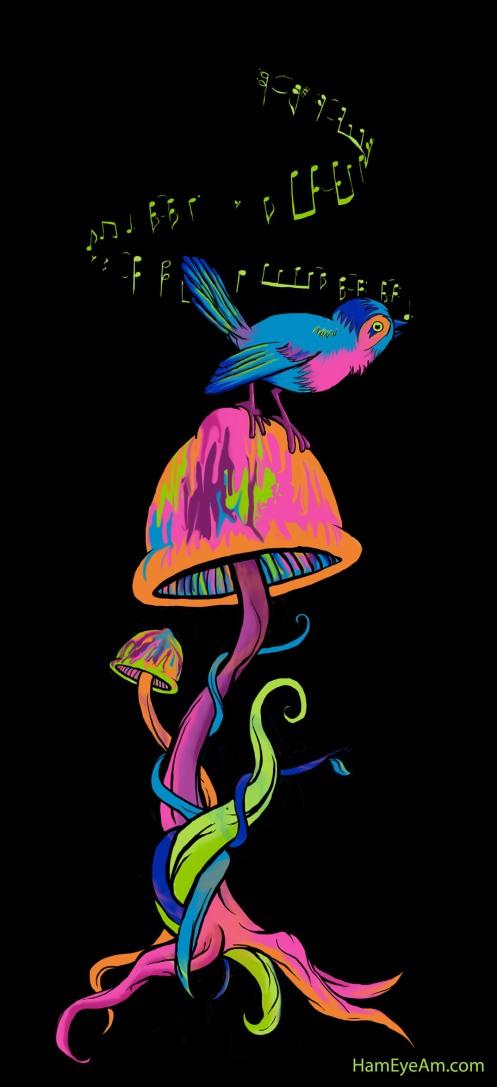Songbird 'n Shroom