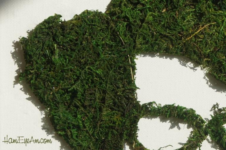 Moss Moss Close Up