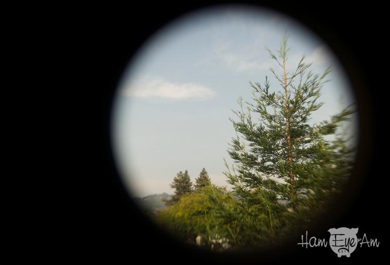 Tree Experiment